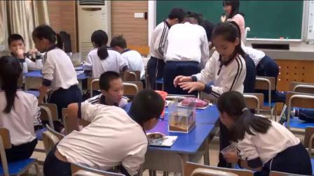 《做一个生态瓶》教科版小学科学五上-广东-卢婷婷